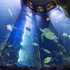 Im Haus des Meeres tauchst du ein in die farbenfrohe Unterwasserwelt.