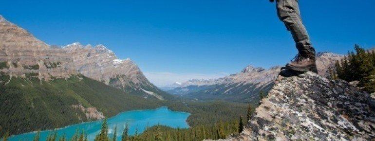 Wenn du aussteigst und zur Aussichtsplattform hoch gehst, siehst du den Peyto Lake noch besser