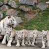 Bei den Führungen durch das Gehege lernen Besucher Wissenswertes über die Tiere.