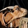 Im Streichelzoo kannst du einigen Bewohnern des Zoos hautnah begegnen.