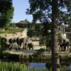 Eine große Herde asiatischer Elefanten lebt im Elefantenpark.