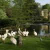 Pelikane sind gute Schwimmer und können auch trotz ihres massigen Körpers ausgezeichnet fliegen.