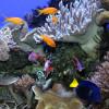 In rund 70 geografisch geordneten Aquarien kannst du die Vielfalt des Meeres bewundern.