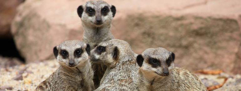 Fast 1400 Tiere aus 243 Arten leben im Magdeburger Zoo.