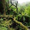 Regenwald am Milford Sound