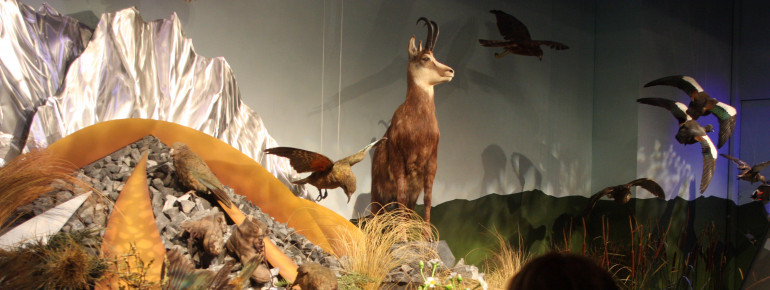 Neuseelands Tierwelt im Te Papa, Museum of New Zealand