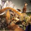 Neuseelands Tierwelt im Te Papa, Museum of New Zealand