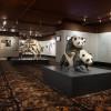 Auch das Sexuallieben der Tierwelt findet Platz im Museum.