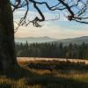Bei einer Wanderung im Bayerischen Wald kannst du die idyllische Landschaft genießen.