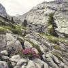 In der Kernzone des Nationalparks hat der Schutz der Natur in ihren natürlichen Abläufen höchste Priorität.