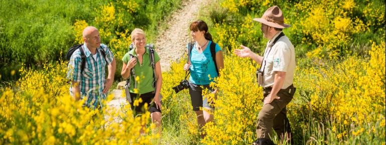 Bei einer Wanderung mit einem Ranger erfährst du viele interessante Infos über die Region.