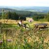 Rund um den Erbeskopf laden verschiedene Touren zu einer Wanderung durch den Nationalpark ein.