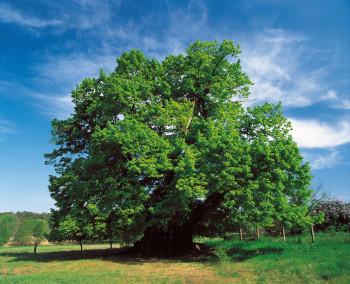 Im Müritz-Nationalpark kann sich die Natur nach ihren eigenen Regeln entwickeln.