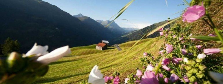 Alpenflora im Naturpark Beverin