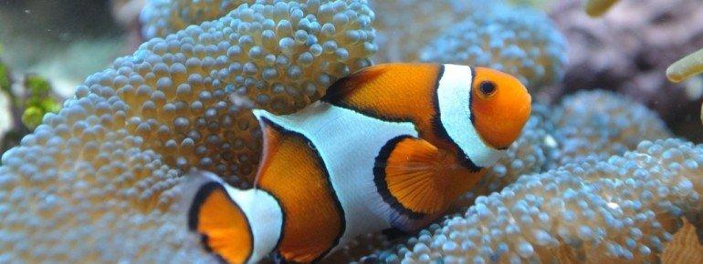 Im Océanopolis kannst du das Leben in unseren Ozeanen kennenlernen.