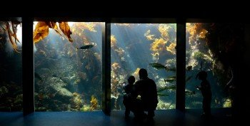 Lass dich von der Unterwasserwelt in den Bann ziehen!