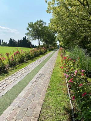 Wunderschön angelegt ist die Rosenallee mit zahlreichen unterschiedlichen Sorten.