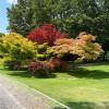 Seltene Baumarten säumen die Wege