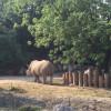 Der Parco Natura Viva ist der einzige Tierpark Europas, in dem Nashörner und Nilpferde gemeinsam leben