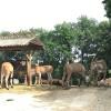 Die afrikanischen Wildtiere im Safaripark sind an langsam vorbeifahrende Autos gewöhnt. Beim Fressen stören lassen sie sich dadurch nicht.