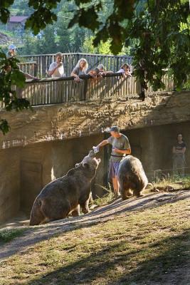 Bärenfütterung im Zoo Pilsen