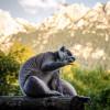 Der Lemur ist nur eine von vielen verschiedenen, exotischen Tierarten im Raritätenzoo Ebbs.
