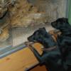 Dein Hund muss bei einem Ausflug in den Reptilienzoo nicht zuhause bleiben.