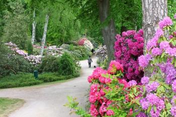 Der Rhododendronpark in Graal-Müritz ist im Mai und Juni besonders farbenfroh.