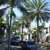 Der von Palmen gesäumte Rodeo Drive