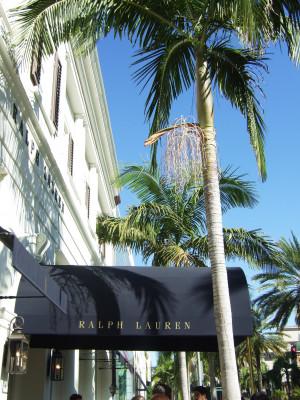 Einkaufen unter Palmen