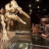 Über 40 Skelette gibt es im Museum