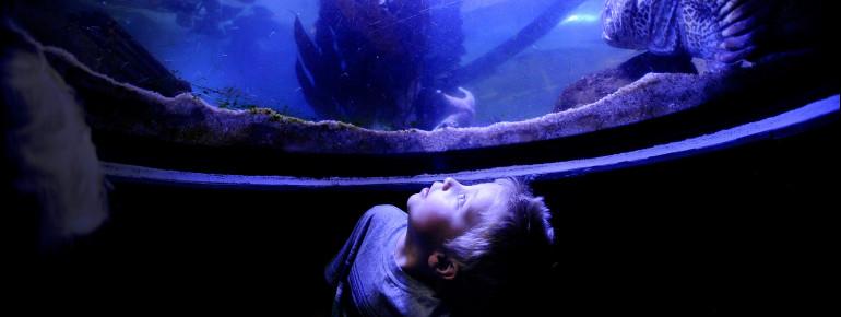 Wissensvermittlung über die Weltmeere, Naturschutz und Arterhaltung spielen eine große Rolle in Denvers Aquarium. Viele vom Aussterben bedrohte Meeresbewohner haben hier ein Zuhause gefunden.