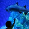 Ein echtes Erlebnis auch für kleine Besucher: Ein Kleinkind zeigt auf einen Hai in einem der Aquarien.