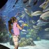 Beste Sicht auf die Unterwasserwelt: Ein kleines Mädchen bestaunt die bunten Fische.