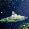 Das hochmoderne Aquarium im Downtown Aquarium Denver beherbergt mehr als 500 Arten, ein Restaurant mit exklusiver Küche und eine Bar.
