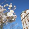 Das Celler Schloss im Frühling