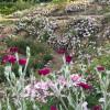Vor allem von April bis Juli erlebst du den Park in voller Blütenpracht.