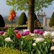 Schloss Wildegg Tulpen