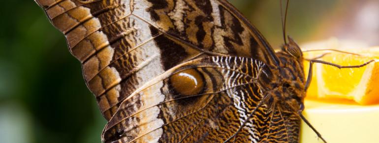 Über 1500 exotische Schmetterlinge leben auf der Schmetterlingsfarm.