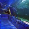 """Im Unterwassertunnel """"tauchst"""" du sprichwörtlich ein in die Welt des Meeres."""