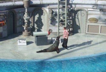 Jede Mege zu Lachen gibt es bei der Seelöwen-Show