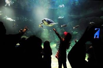 Im SeaWorld kannst du faszinierende Unterwasserwelten entdecken