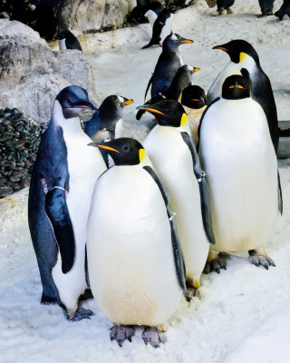 Im SeaWorld leben verschiedene Arten von Pinguinen