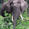 Elefanten dürfen im Park natürlich genauso wenig fehlen, wie Giraffen, Nashörner, Zebras und Co.