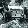 Vor über 65 Jahren wurden Steinböcke im Pitztal wieder angesiedelt.