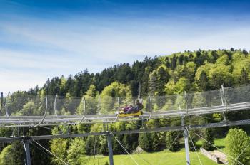 Die Coasterbahn führt kurvenreich zwischen den Bäumen ins Tal hinab.