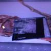 """Auf einem """"Ötzi-großen"""" Tablet kann man den Körper des Eismannes in verschiedenen Arten bestaunen"""