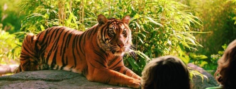 Im Tierpark sind alle Exoten vertreten