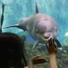 Das Delfinarium ist ein Highlight des Tiergartens Nürnberg.