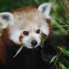 Der Tiergarten versucht die Lebensräume der Tiere so naturnah wie möglich zu halten